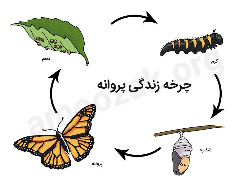 چند فعالیت ساده درباره چرخه زندگی پروانه