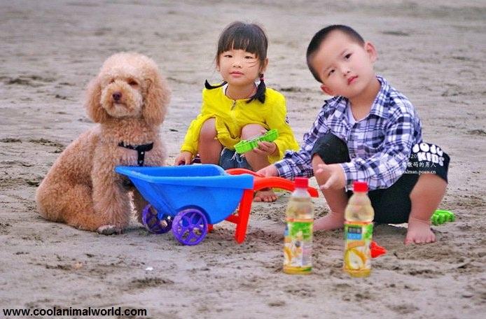 بازی و رشد خلاقیت در کودکان
