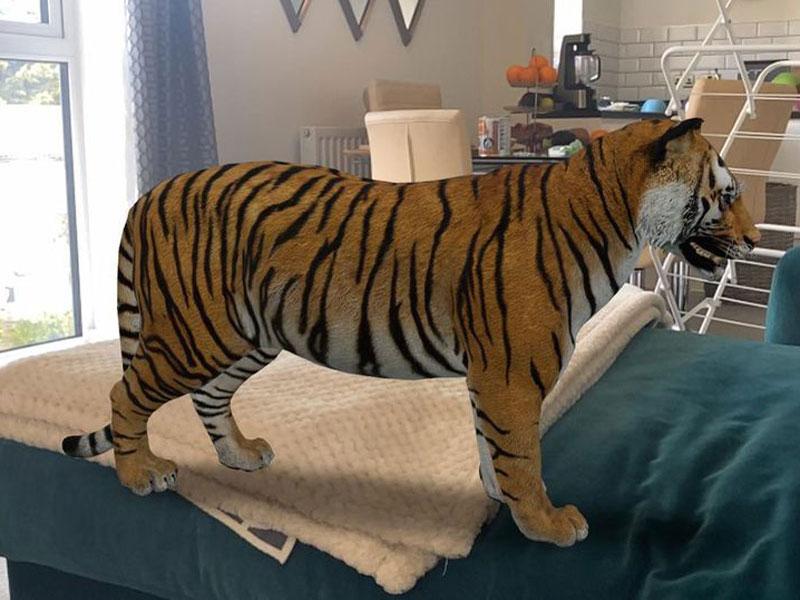 بازیهای ساده در خانه، نمایش سهبعدی جانوران در خانه